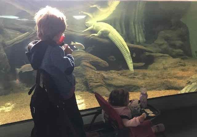 Things to do at the California Academy of Sciences.